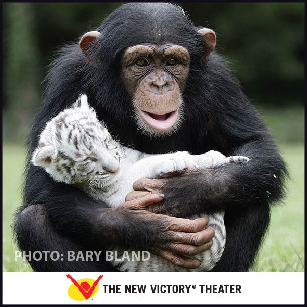 'Anjana the Chimp and Tiger Cub', photo by Bary Bland