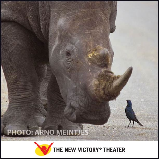 'White Rhino and Friend' (a bird), photo by Arno Meintjes