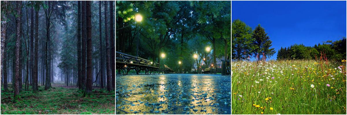 A foggy forest, a rainy street and sunny field
